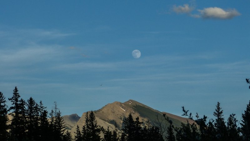 full moon over high mountain, clear blue sky, bird