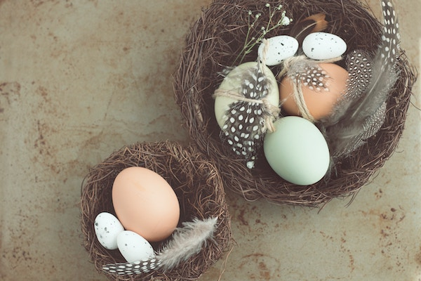 pretty eggs with feathers in nests