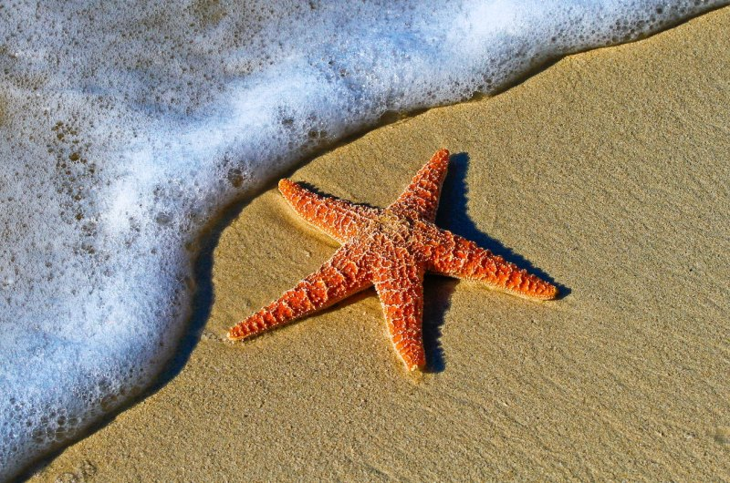starfish on a sandy beach tide coming in