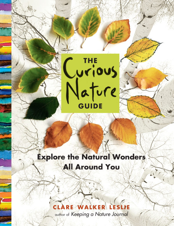 The Curious Nature Guide by Clare Walker Leslie - cover