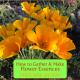 How to Gather & Make Flower Essences