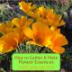 How to Gather & Make Flower Essences