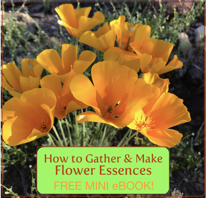 How to Gather & Make Flower Essences (FREE MINI eBOOK!)
