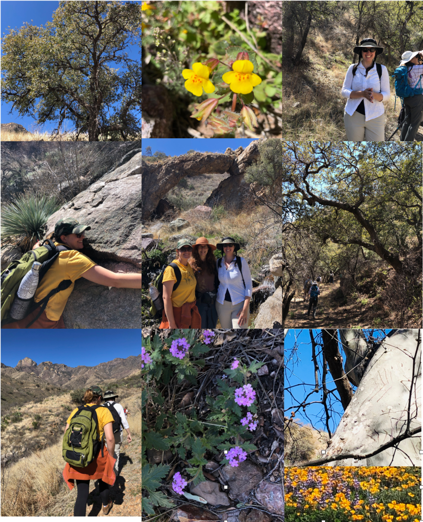 Brown canyon flora and freinds