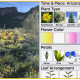A lovely (and very useful) free Arizona Wildflowers identification app for your phone
