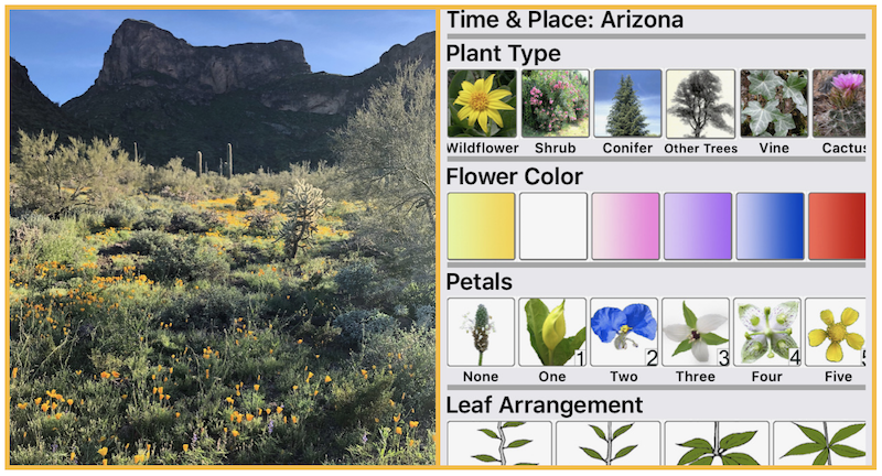Picacho Peak wildflowers + app