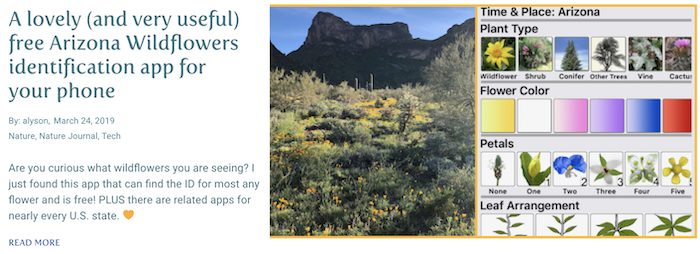 A lovey free AZ Wildflowers app for your phone