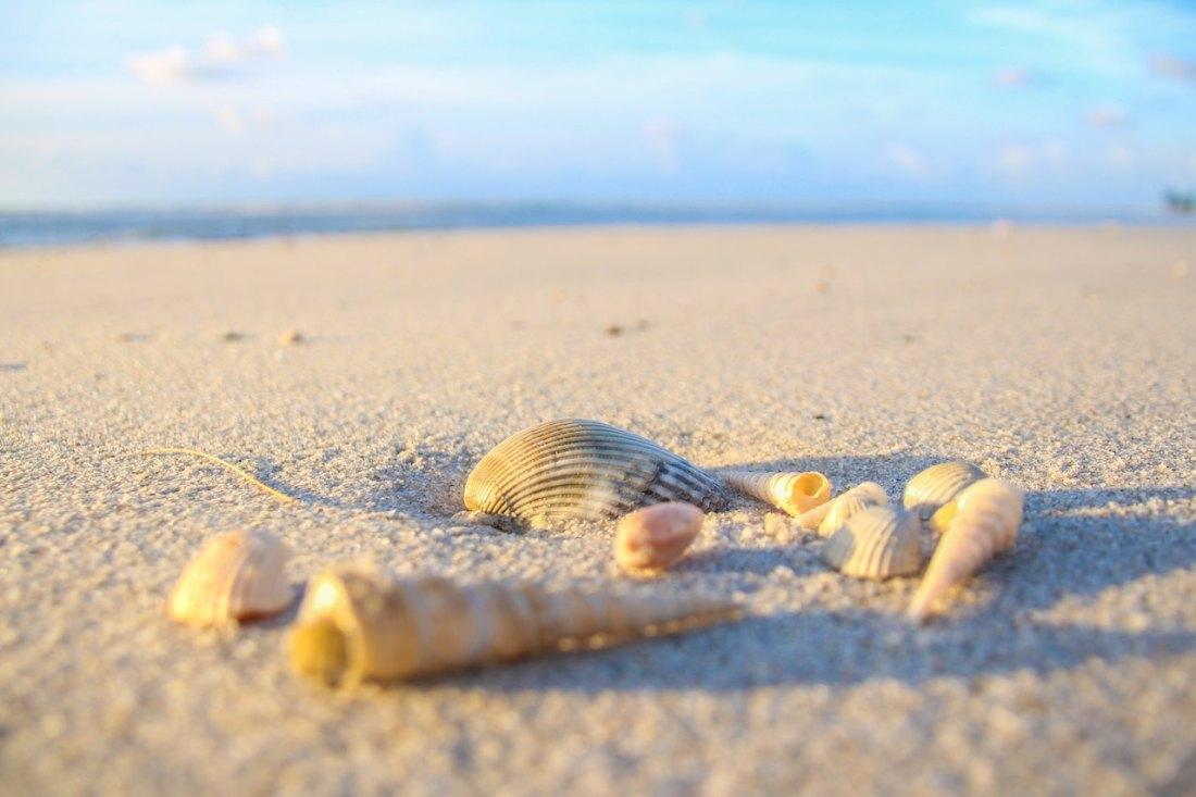 pretty shells on beach