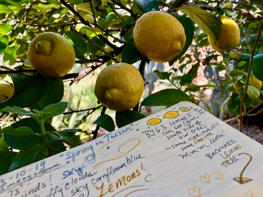 lemon tree nature journal