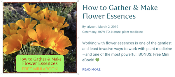 TN 5 How to Gather & Make Flower Essences