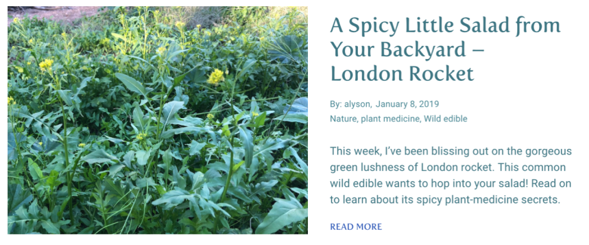 A Spicy Little Salad from Your Backyard - London Rocket